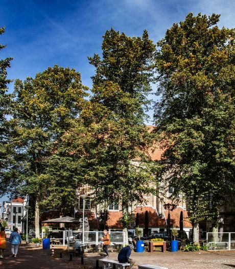 Bomenstichting staat volgens gemeente vrijwel alleen met bezwaar over kap Deventer binnenstad