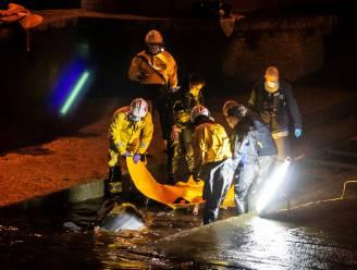 Walvis die vastzat in sluis Thames na urenlange reddingsoperatie bevrijd