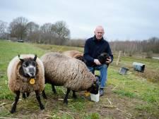 'Loslopende honden gevaar voor schapen met lammeren'