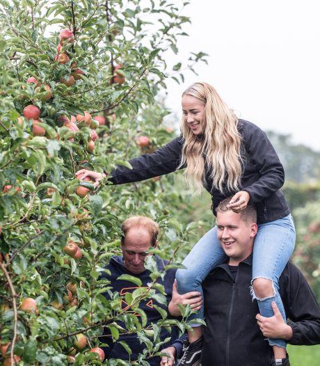 Je eigen appels plukken in Groessen: 'De mooiste hangen bovenin'