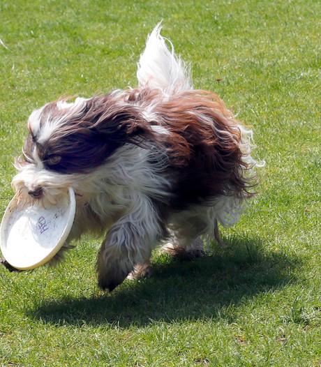 Joekeldag in Eindhoven: Van hondenfrisbee tot fotoshoot
