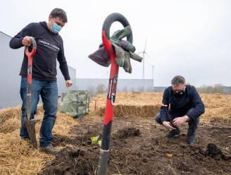"""Goodman plant minibos aan volgens Japanse methode: """"30 keer dichter begroeid en 20 keer meer biodiversiteit dan klassiek bos"""""""