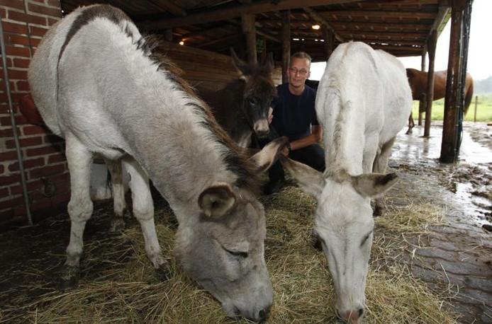 Enorme zwarte ezels