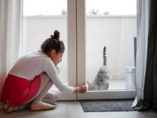 Grâce à ces croquettes pour chat, vous ne serez plus allergique à votre animal de compagnie