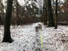 Oost-Nederland wordt wakker in winters decor: dat ziet er zo uit