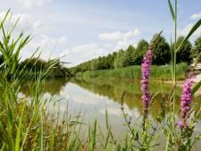 Hengelo gaat door met vervangen asfalt door groen en nu is Slangenbeek aan de beurt