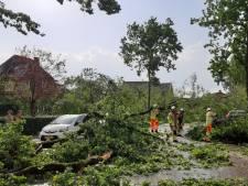 Bossen rondom Leersum na storm bestempeld tot 'levensgevaarlijk gebied'