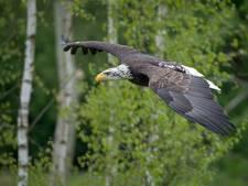 Roofvogelpark Topvogel in Diessen viert 10-jarig bestaan
