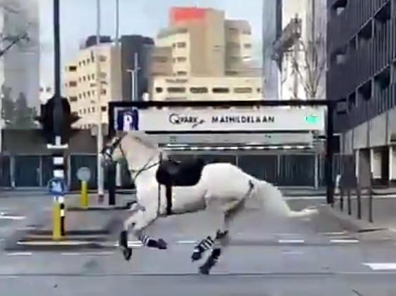Politiepaard op hol in Eindhoven tijdens de rellen