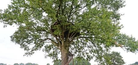 Artistieke boomtuin op grens Twente en Achterhoek  vernield