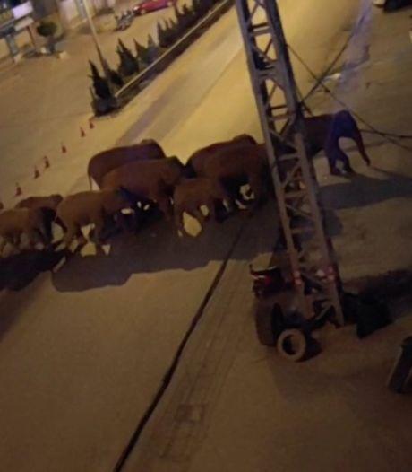 China zet alles in om losgeslagen kudde olifanten uit miljoenenstad te houden