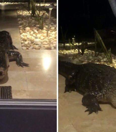 Enorme alligator brengt bezoekje aan huis in Florida: 'Hij kan zo door het glas heen breken'