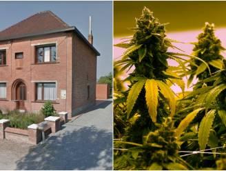Koppel had cannabisplantage met 800 planten in woning in bijzijn van hun twee jonge kinderen