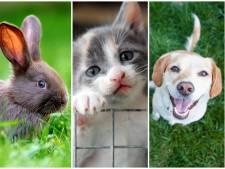 Verzeker je hond of kat, dan hoeft hij ook geen spuitje