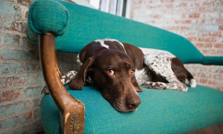 Vrouw vindt hond na 10 jaar weer terug