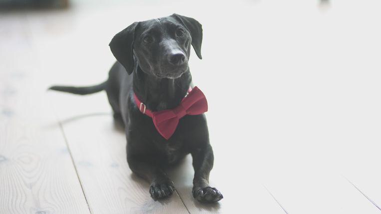 Etiquette Voor Honden Zo Wordt Een Viervoeter Een Klassevolle