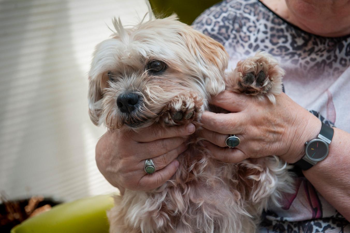 Bruno, het hondje van de Bommelse Tina Bragt, werd flink te grazen genomen door en grasaar.