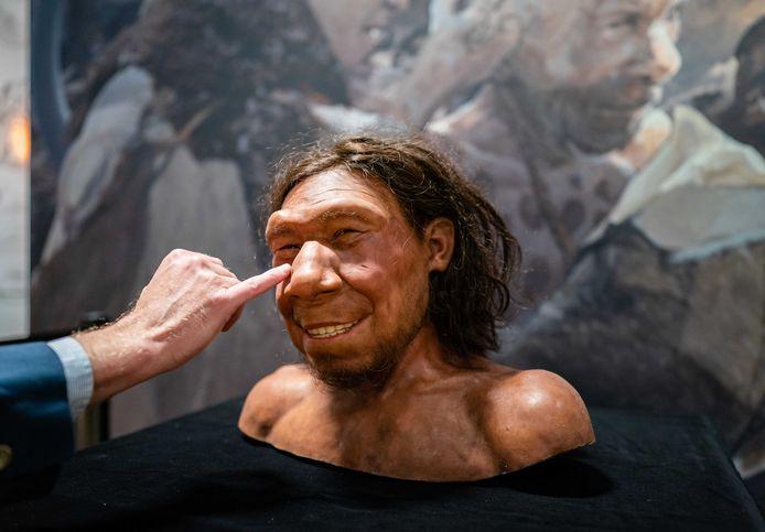 Reconstructie van de eerste neanderthaler van Nederland, met bijnaam Krijn, wordt tentoongesteld in het Rijksmuseum van Oudheden.