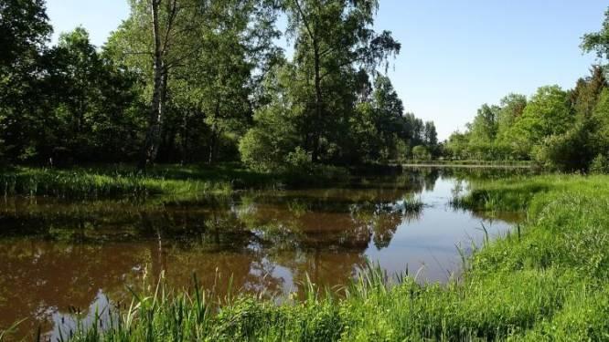 Natuurpunt sloopt vervallen weekendverblijf in De Roost om vijver in natuurlijke staat te herstellen