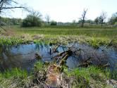 Een positief effect van de coronacrisis: de natuur in mijn omgeving heb ik veel beter leren kennen en waarderen
