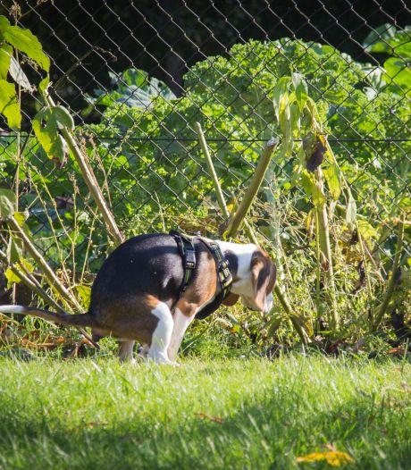 Het gevaar van geveltuinen: katten en honden die hun behoefte erin doen