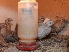 Duizenden vogels leven zonder water en daglicht bij fokker in omgeving Breda
