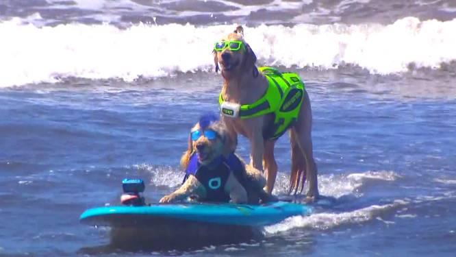 Des chiens surfent pour la bonne cause en Californie