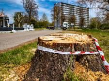 Te vroege kap van beeldbepalende kastanje in Deventer krijgt mogelijk gevolgen: gemeente doet melding bij OM