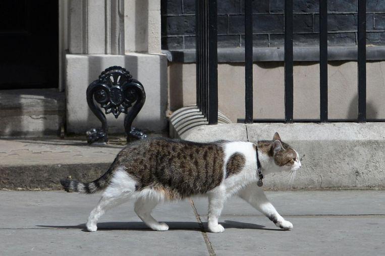 Larry, oftewel Chief Mouser, paradeert voor de deur van 10 Downing Street. De kat blijft er wonen. Tijdens zijn laatste vragenuurtje zinspeelde Cameron op geruchten dat hij Larry niet leuk zou vinden. Gekscherend liet hij een foto van hem en Larry zien. Beeld afp