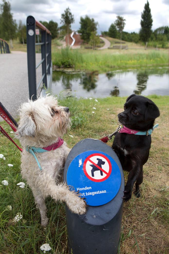 Deze honden begrijpen niets van het verbodsbord.