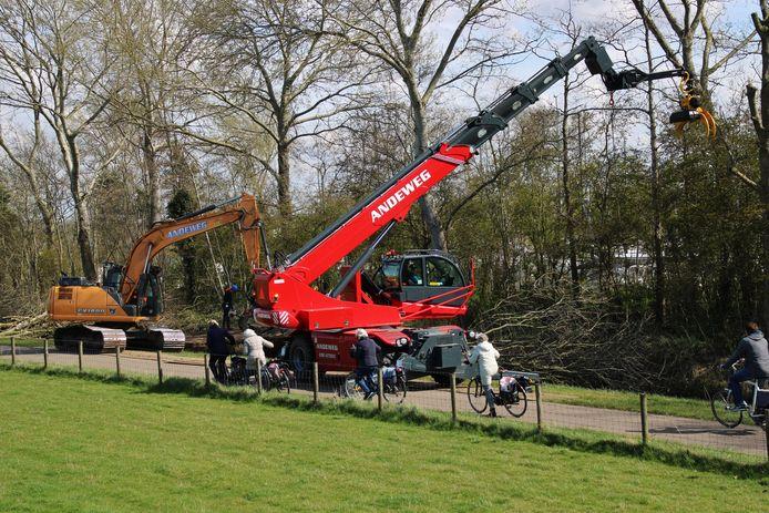 Fietsers zien hoe de bomen op het watersportterrein worden gekapt.