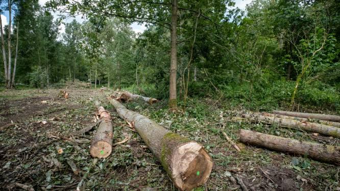 Illegale houtkap blijkt bosbeheer