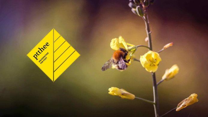 Ptthee is een Nederlandse startup die theekruiden inzaait in akkerranden en zo de biodiversiteit bevordert.