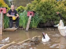 Vogelgriep uitgebroken bij hobbyboerderij Mijdrecht: 'Afscheid nemen van je dieren doet heel veel pijn'
