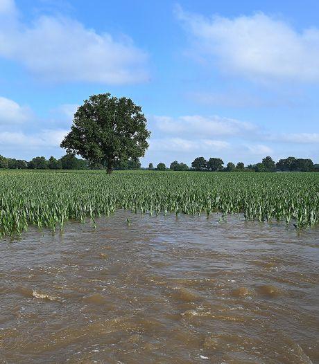 Schade voor boeren door hoogwater enorm: 'De aardappelen? Die kun je vergeten'