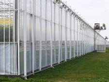 Glastuinbouw draagt flink bij aan energiebesparing in Midden-Delfland