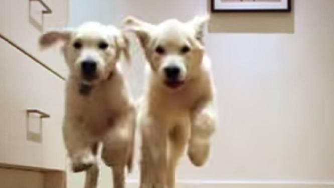 Geweldige timelapse: kleine puppy's worden groot, maar enthousiasme blijft