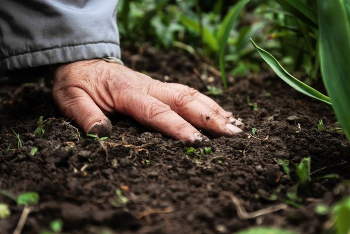 A female old hand on soil-earth. Close-up. Concept of old age-youth, life, health, nature. LIVIOS tuin