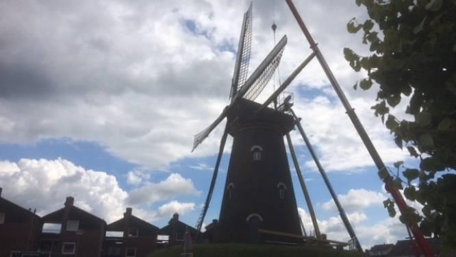 Nieuwe spruiten voor molen De Visscher in Goirle