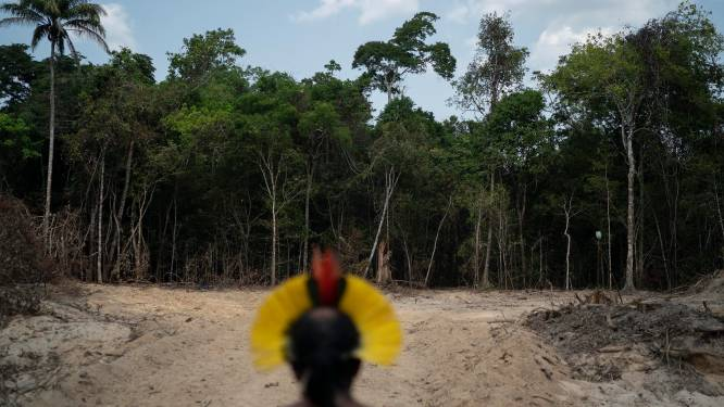 Ontbossing Amazonewoud in Brazilië gaat in sneltempo verder