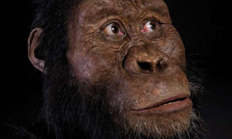 Uit een analyse van de schedel van MRD blijkt dat hij ongeveer 3,8 miljoen jaar oud is. Beeld Nature