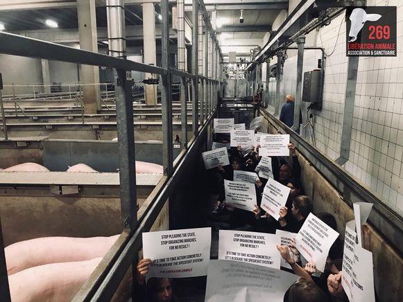 Animal Liberation voert actie in het slachthuis.