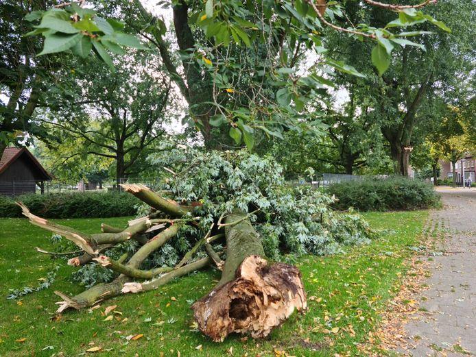 De rotte tak bij het dierenpark aan de Hortensialaan in Helmond die zondagavond van de boom (verderop rechts) is afgebroken.