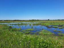 Publieksdag Binnenveldse Hooilanden met excursies in nieuwe natuur
