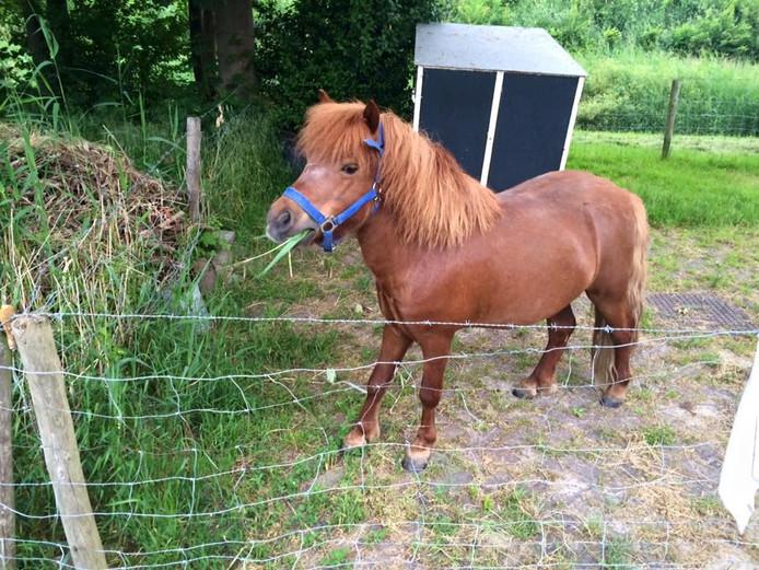 De politie Noordoostpolder/Urk toonde de pony op haar Facebook-pagina, voordat het dier met zijn eigenaar werd herenigd.