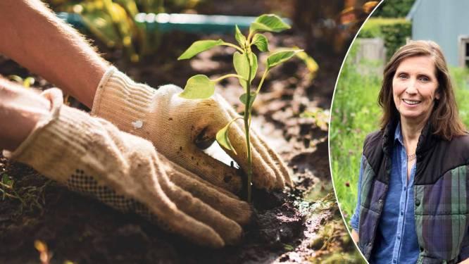 """Psychiater legt uit waarom in de tuin werken zo helend is: """"Wie zorgt voor planten, beseft soms: ik zorg te weinig voor mezelf"""""""