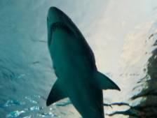 Une jeune femme de 19 ans tuée par un requin en Nouvelle-Zélande