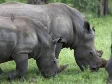 Afgeknipte teennagels moeten neushoorn redden
