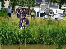 Hert verdoofd en gevangen na ontsnapping in Barneveld