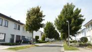 Drie speelstraten deze zomer in Ninove, Pollare en Lieferinge